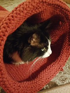Ravelry: Knitted Cat Tunnel pattern by Clarice Asquith. Very cute and  appears to be well loved :) | Knitted cat, Cat bed pattern, Knitted animals | 320x240