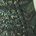 Old Forest Socks pattern
