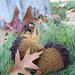 le gland du chêne [acorn] pattern