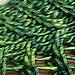 Norfolk Island Pine Mitts pattern