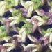 Spring Cowl pattern