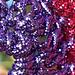 Crocheted Flower Scrubbie pattern