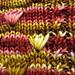 Permanent residency socks pattern