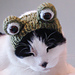 Frog Costume Hat for Pet (Knit Version) pattern
