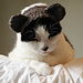Bear Costume Hat for Pet (Knit Version) pattern