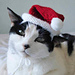 santa claus costume hat for pet pattern