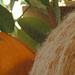 Pumpkin Cozy pattern