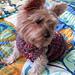 Puffer Dog Sweater pattern