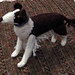 Border Collie pattern
