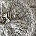 Grey Cowl pattern