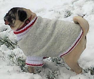 Ravelry Pug Monkey Knit Dog Sweater pattern by Scruffy Dog
