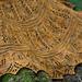Golden Hazel pattern