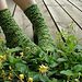 Elfine's Socks pattern