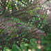 Undergrowth pattern
