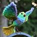 Song Bird pattern