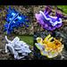 Nudibranch: Set 1 pattern