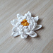 Water Lily Flower pattern