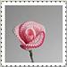Little Rose pattern