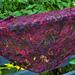 Morning Glory Shawl pattern