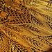 Golden Autumn Shawl pattern