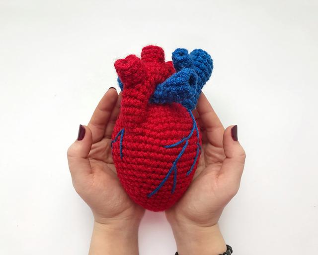 Human Heart Anatomical Crochet Pattern   Crochet game, Crochet ...   512x640