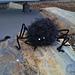 Creepy Spider pattern
