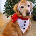 Snowman Christmas Dog Bandana and Headband pattern