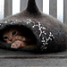 Fairy house/ Cat Cocoon / Basket pattern