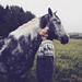 Anna huolia hevosen sweater pattern