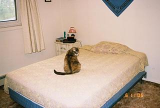 Cat on bedspread