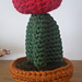 Moon Cactus pattern