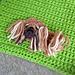 Pekingese Patch pattern