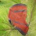 Lagertha Cowl pattern