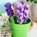 Mother's Day Lavender Pen Cozy Bouquet pattern