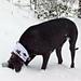Snowbound Trails Cowl pattern