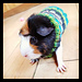 Easy Knit Guinea Pig Sweater pattern
