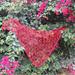 Lila berry 2.0 pattern