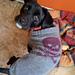 I-Matey Dog Coat pattern