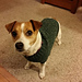Mock Cable Jack Russell Sweater pattern