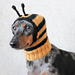 Small Dog Bee Hat pattern