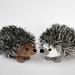 Curious hedgehog pattern