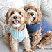 Pullover Dog Sweater pattern