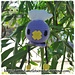 Chibi Drifloon (pokemon) pattern