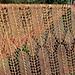 Ensis pattern
