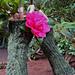 Camellia pattern