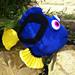 Dory Blue Tang Fish pattern