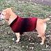 Easy Dog Sweater Medium pattern