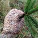 FallinLove Fingerless Mittens pattern