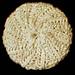 Flat Spiral Scrubbie pattern