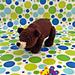 Winston the Bear pattern